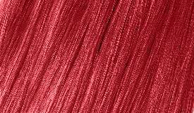 23 RED CURRANT / czerwona porzeczka